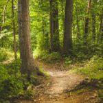 Dieses Bild hat ein leeres Alt-Attribut. Der Dateiname ist forest-1868028__480-150x150.jpg