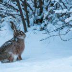 Dieses Bild hat ein leeres Alt-Attribut. Der Dateiname ist winter-627948__480-150x150.jpg